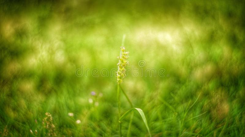 Grass Bokeh royalty free stock image