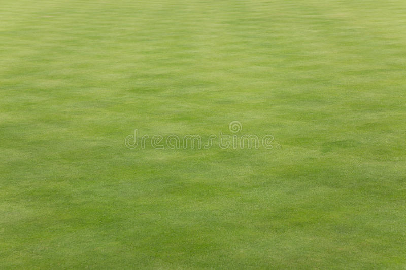 Grass on a bowling green. Short grass on a bowling green royalty free stock photo