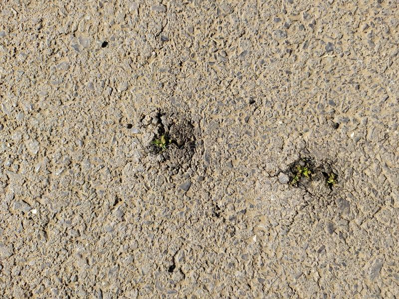 Power of nature. Rising sprout breaks through the asphalt pavement. Grass breaks through the asphalt pavement. From under the asphalt to the stars stock image