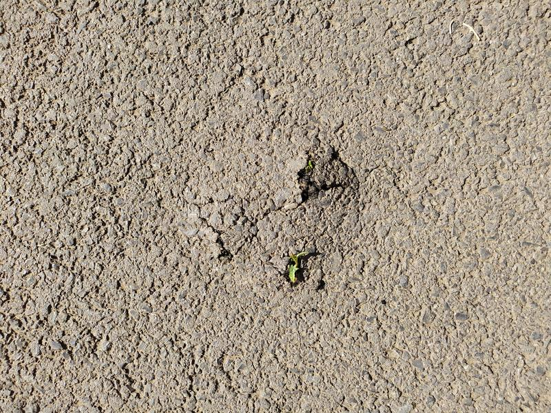 Power of nature. Rising sprout breaks through the asphalt pavement. Grass breaks through the asphalt pavement. From under the asphalt to the stars stock photo