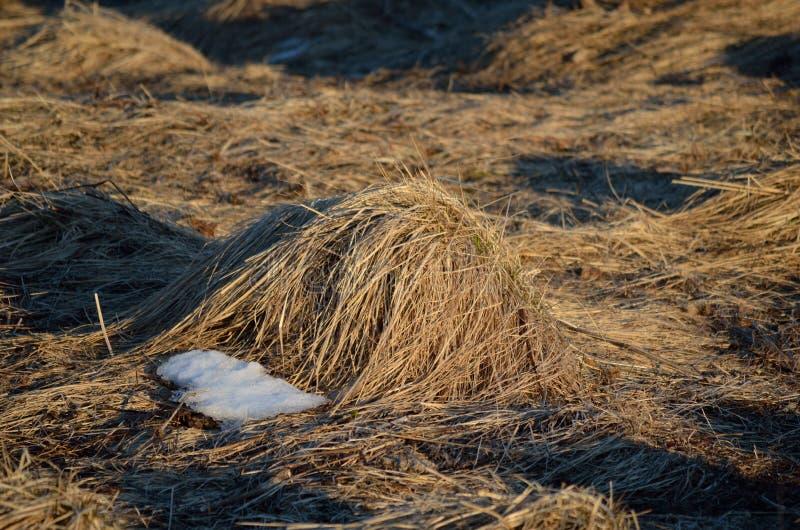 Grass bump royalty free stock photos
