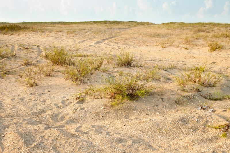 Grass bushes and bushes on the sand at sunset royalty free stock photo
