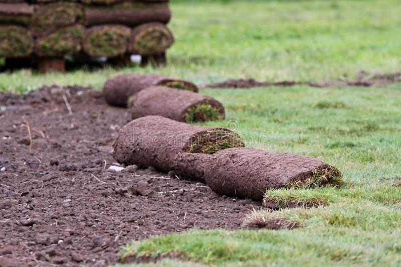 Grass carpet. New grass - preparation and installation stock photos