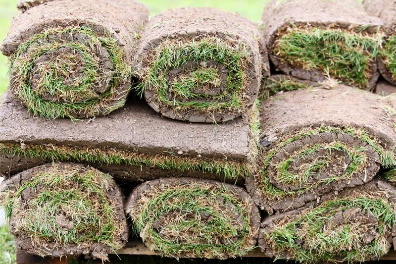 Grass carpet. New grass - preparation and installation stock images