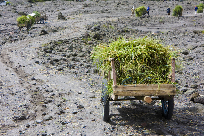 Grass Carts at Mount Merapi, Indonesia. Image of carts full of grass collected from the upper reaches of the volcano, Mount Merapi, Yogyakarta, Indonesia for stock images