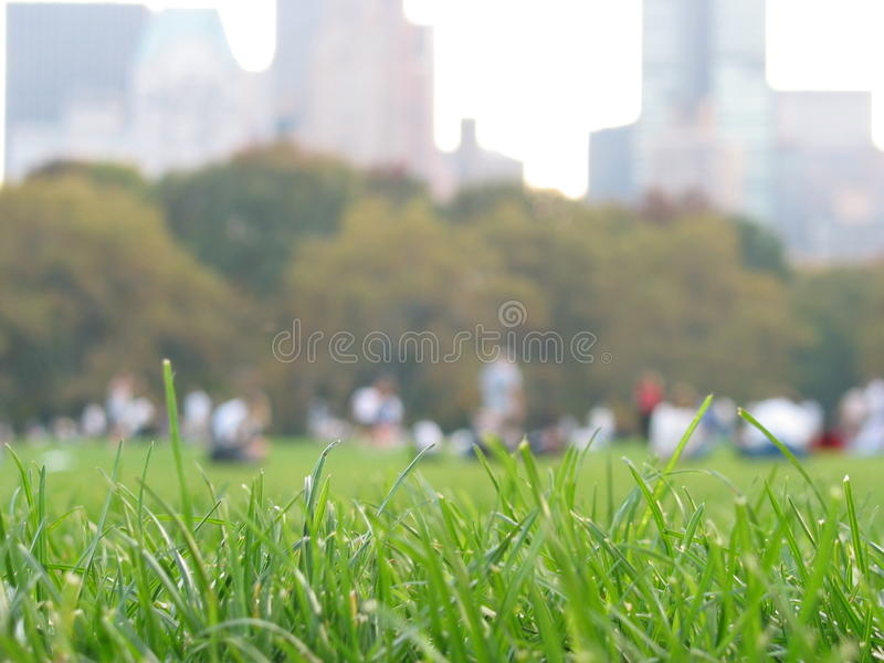 Grass in Central Park. Grass and people in Central park New York, greal lawn royalty free stock photo
