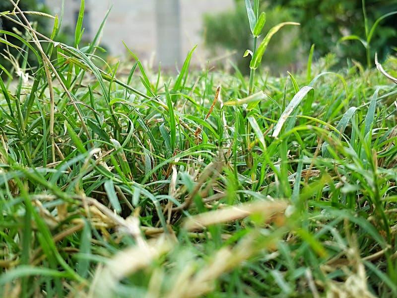 Grass clarity stock photos