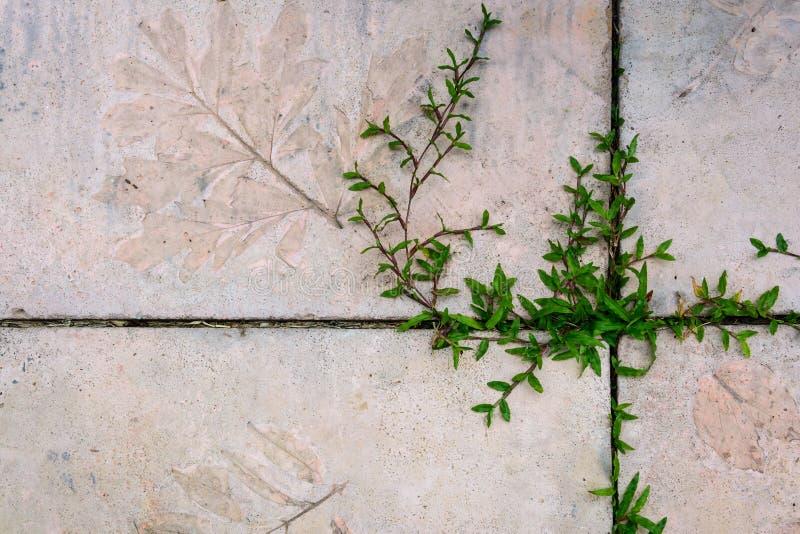 Grass climb from footpath in the garden stock photos