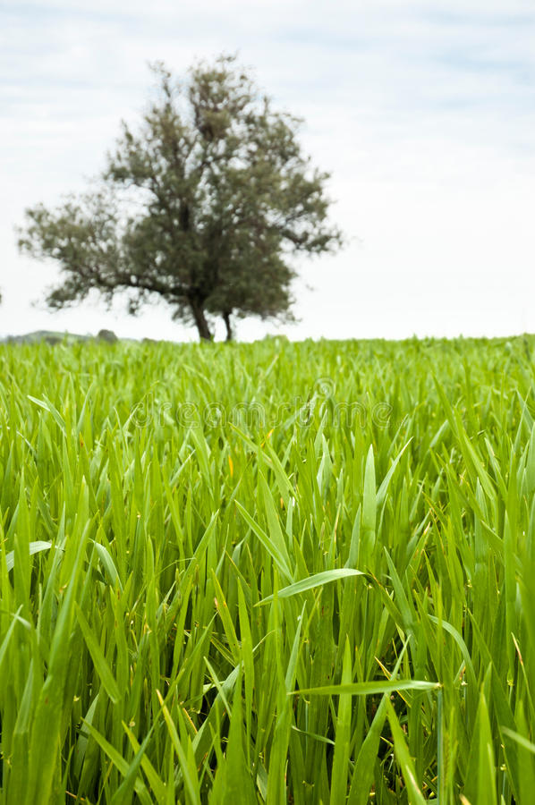 Download Grass close up stock photo. Image of field, nobody, nature - 20173168