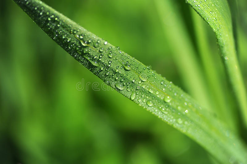 Grass close up. Fresh new grass in the spring after a shower of rain royalty free stock photography