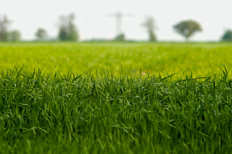Download Grass closeup stock image. Image of defocused, plant - 14507339