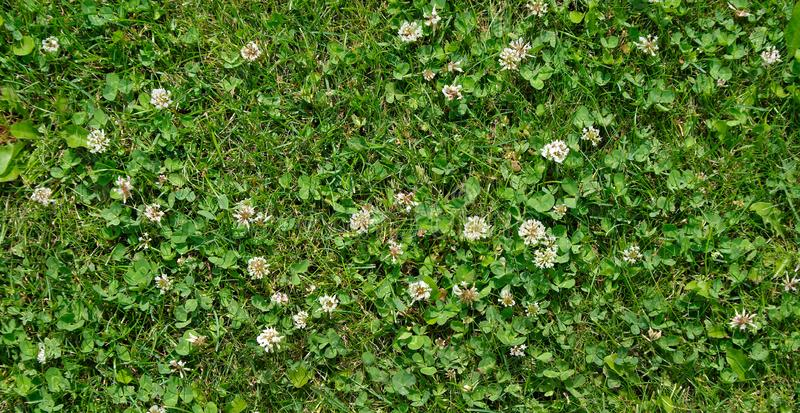 grass clover texture background. stock photography