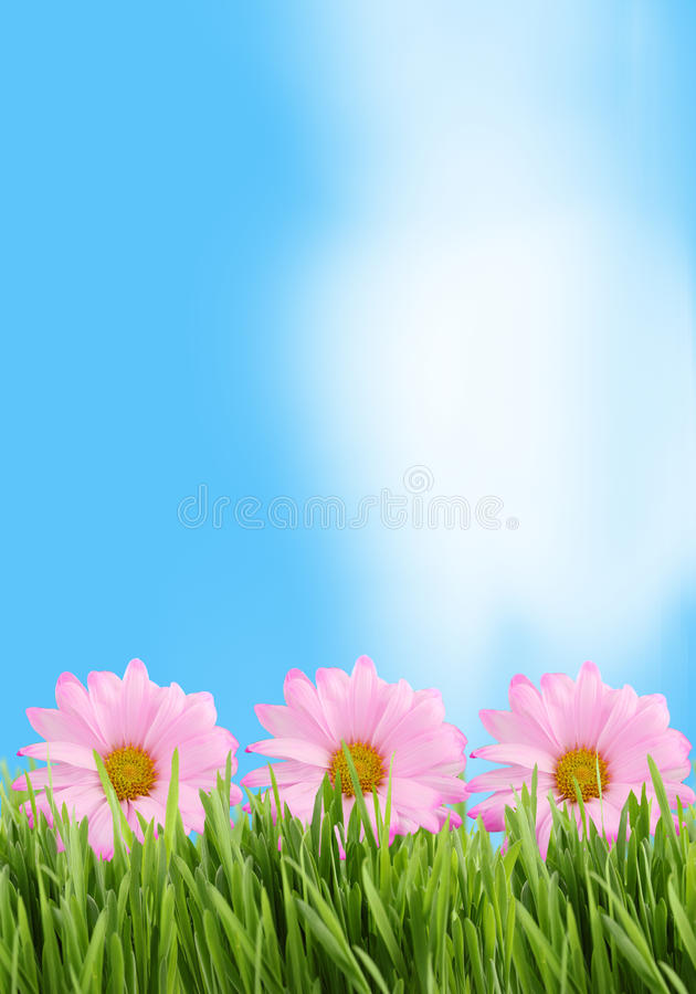 Download Grass and daisy background stock photo. Image of flowers - 14442560