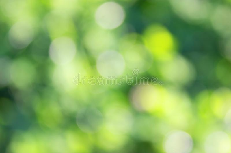 Grass defocused background. Green grass defocused background. beautiful summer day stock photography
