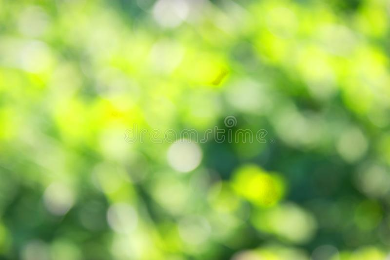 Grass defocused background. Green grass defocused background. beautiful summer day stock photos
