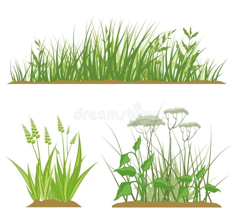 Download Grass Design Elements stock illustration. Image of ornamental - 12150579