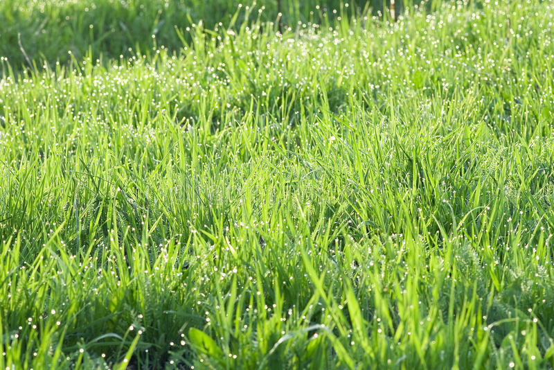 Download Grass in dew stock photo. Image of ecology, color, close - 15923032