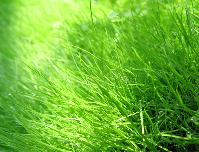 Grass & dew