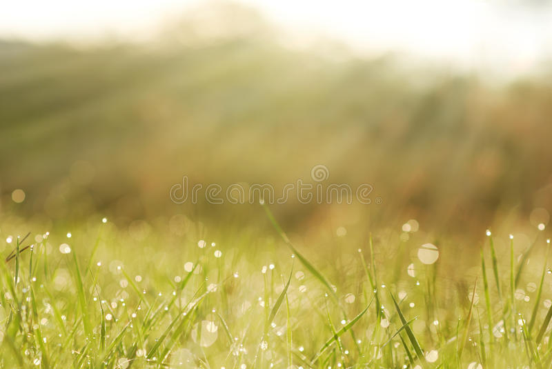 Grass in dew with blurred trees in bokeh stock photo