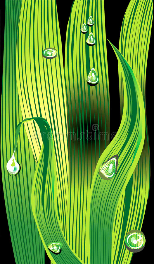 Download Grass with dew drops stock vector. Illustration of ecology - 23357175