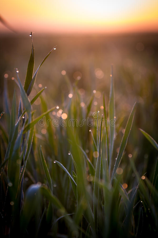 Download Grass stock photo. Image of full, liquid, life, image - 39500518