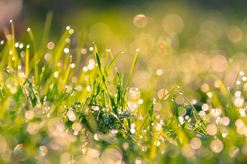 Download Grass stock image. Image of morning, leaf, blade, growth - 39500521