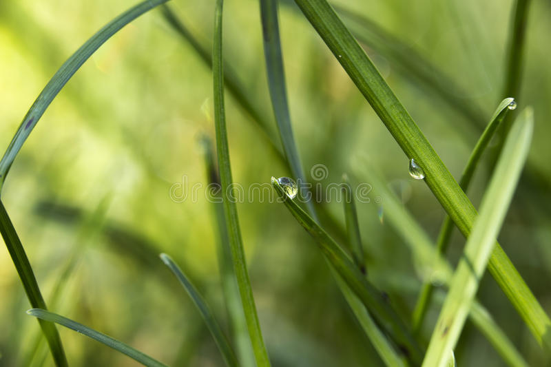Grass with dew stock photography