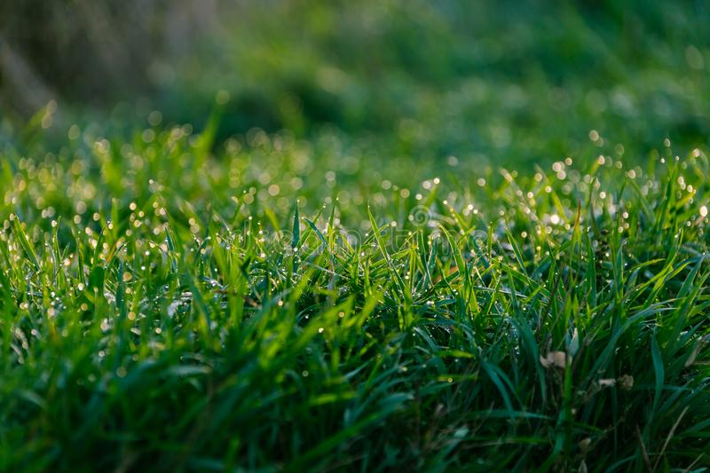 Grass with dew pattern. Morning stock photo