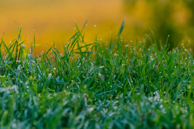 Grass with dew pattern. Morning royalty free stock photos