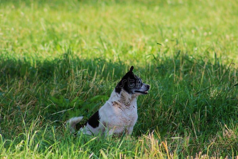 Grass, Dog Breed, Fauna, Dog Breed Group Free Public Domain Cc0 Image