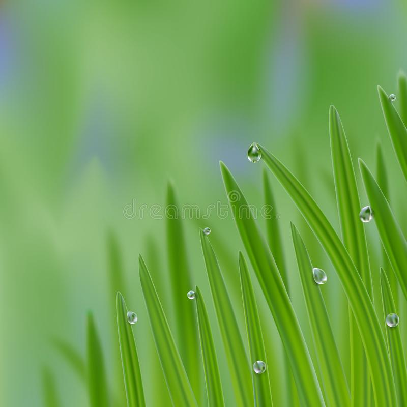 Grass in droplets of water background. A nature fresh composition. Grass with morning dew background. Grass s in droplets of water nature composition with royalty free illustration