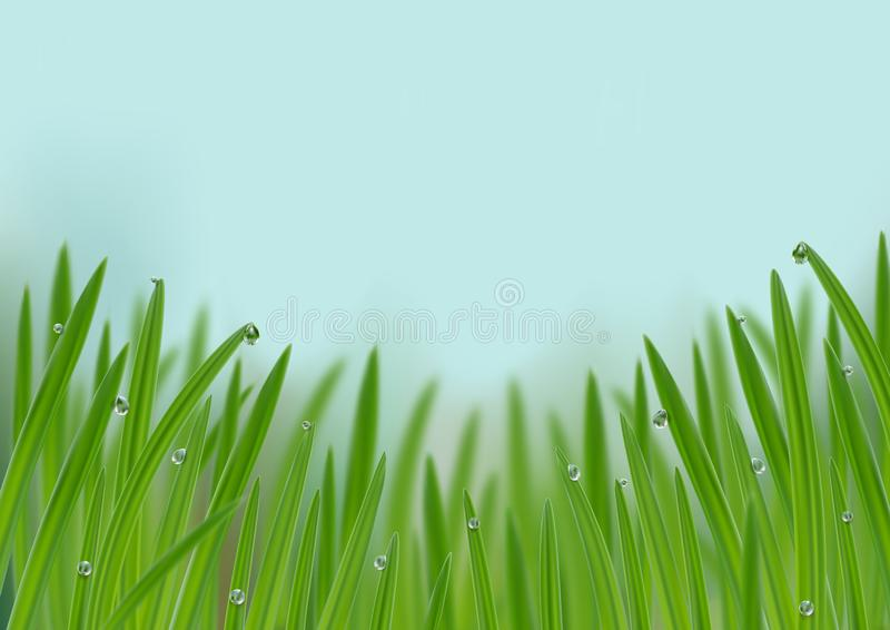 Grass in droplets of water background. A nature fresh web banner. Grass with morning dew web banner background. Grass s in droplets of water nature composition royalty free illustration