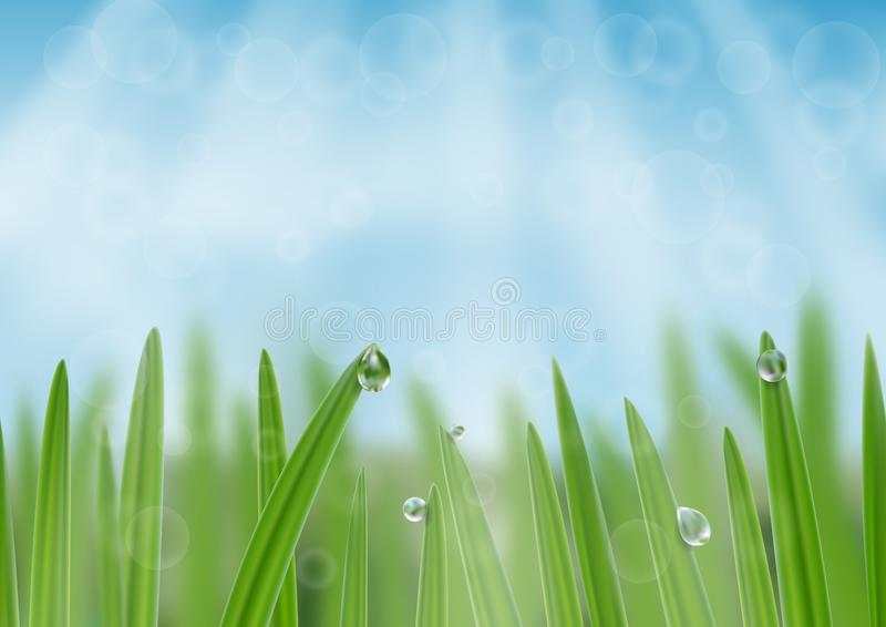 Grass in droplets of water background. A nature fresh web banner. Grass with morning dew web banner background. Grass s in droplets of water nature composition stock illustration