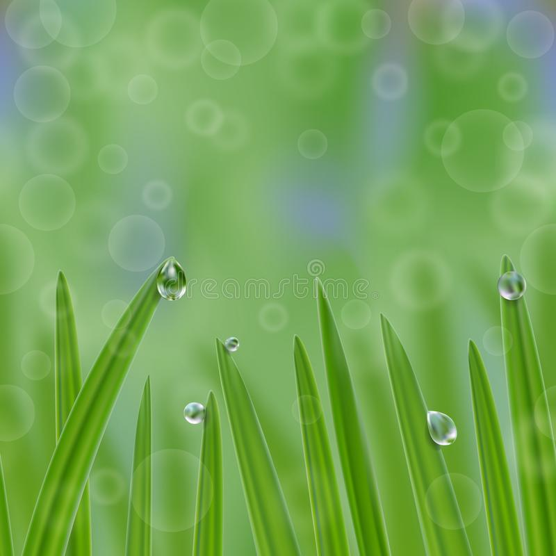 Grass in droplets of water seamless border. Grass with morning dew seamless border. Grass s in droplets of water nature repeat background with effects of soft stock illustration