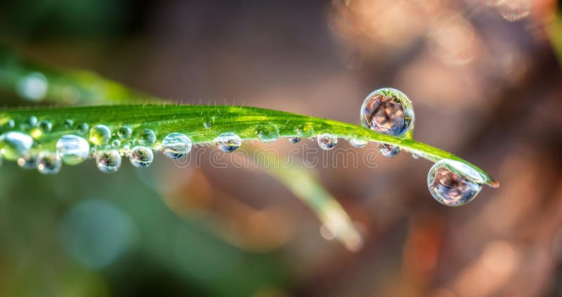 Grass with drops stock photography