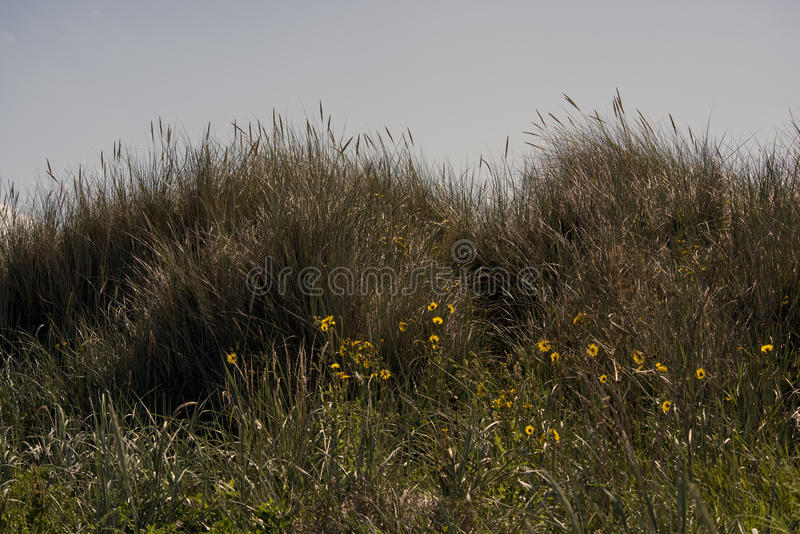 Grass dune with flowers stock photos