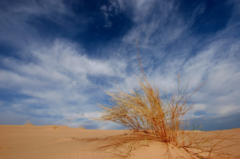 Grass, dune and sky royalty free stock image