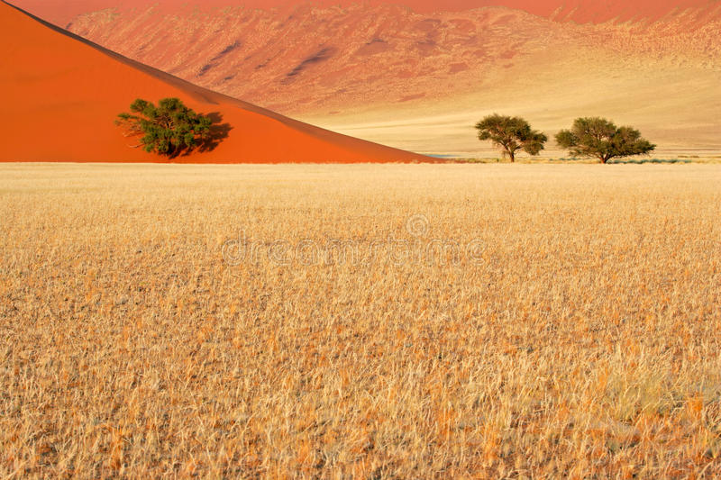 Grass, dune and trees, Sossusvlei, Namibia royalty free stock image