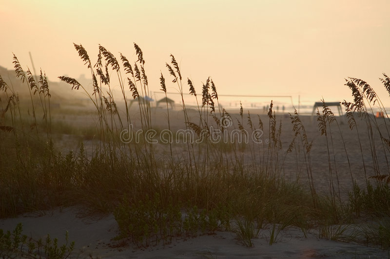 Download Grass in the dunes stock photo. Image of silhouette, waves - 15346