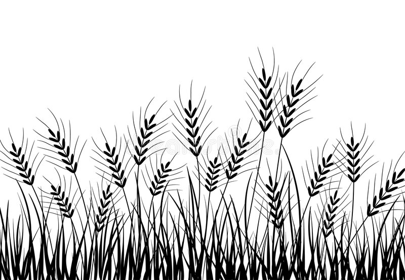 Grass and ears, vector stock illustration