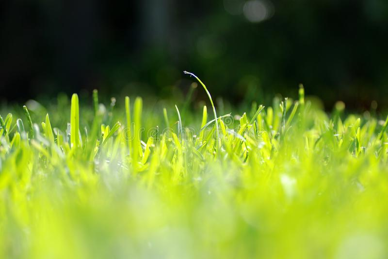 Grass Eye Level royalty free stock photos