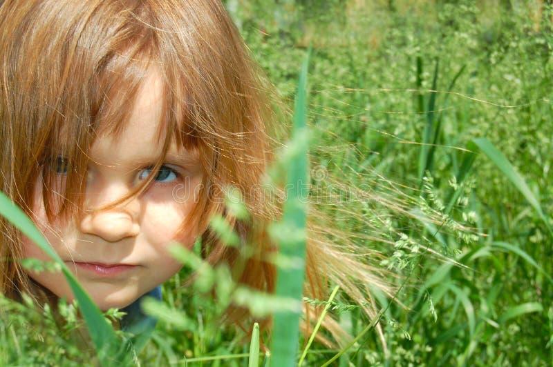 Grass fairy stock photography