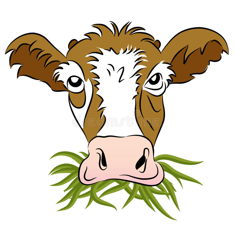 Grass Fed Cow Stock Photos