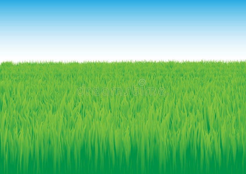 Grass_field vector illustratie
