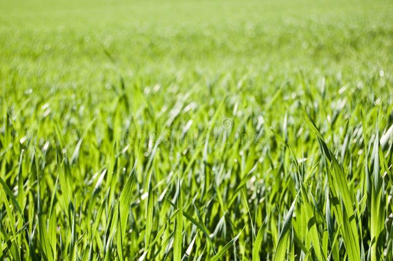 Download Grass Field stock photo. Image of fresh, beautiful, blade - 14470800