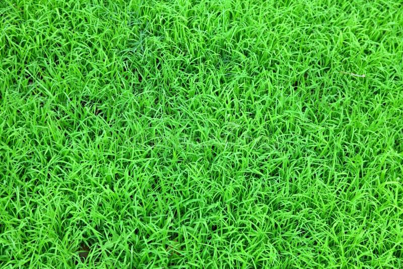 Grass Field royalty free stock photos