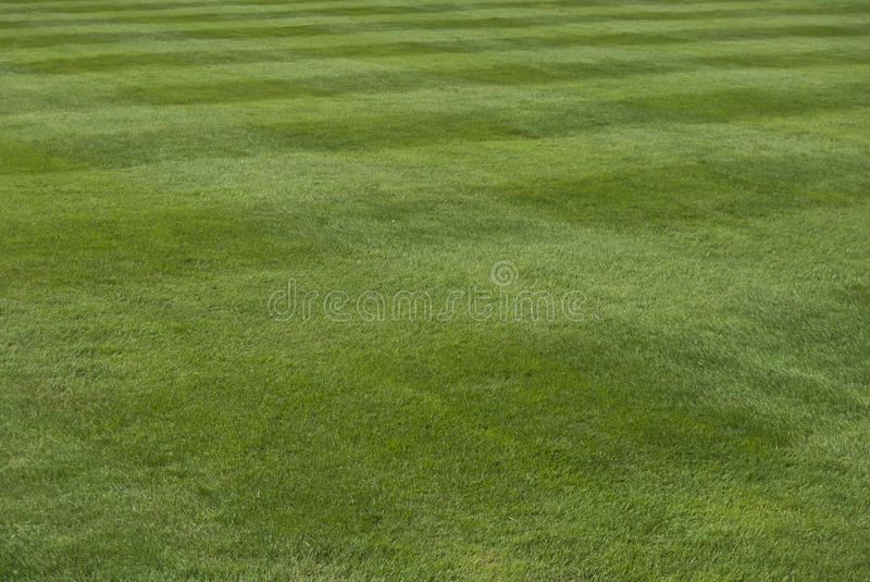 Grass field. With cutting pattern stock images