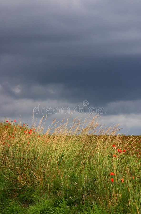 Meadow with rain clouds above stock photo