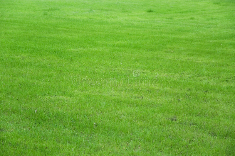 Grass Field. Nature green background royalty free stock images