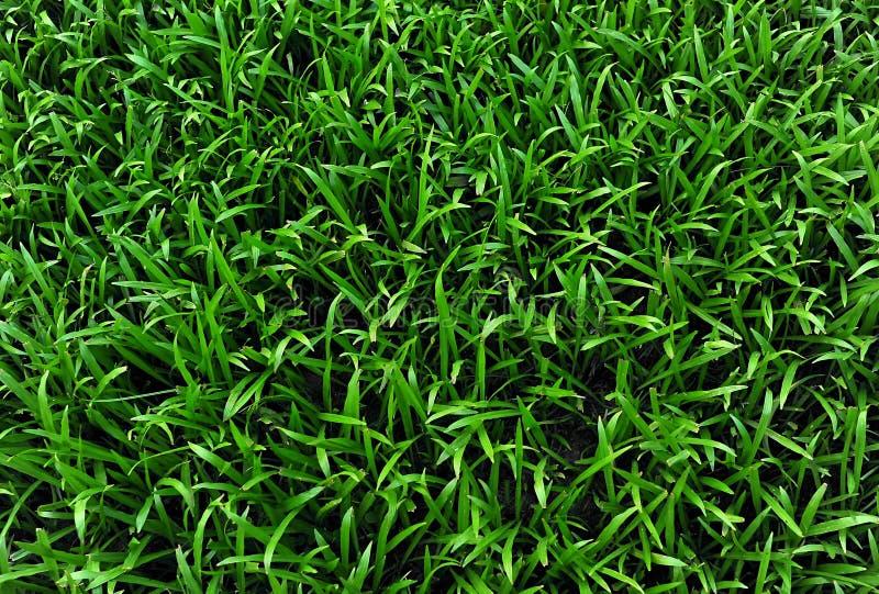 Grass field background stock photos